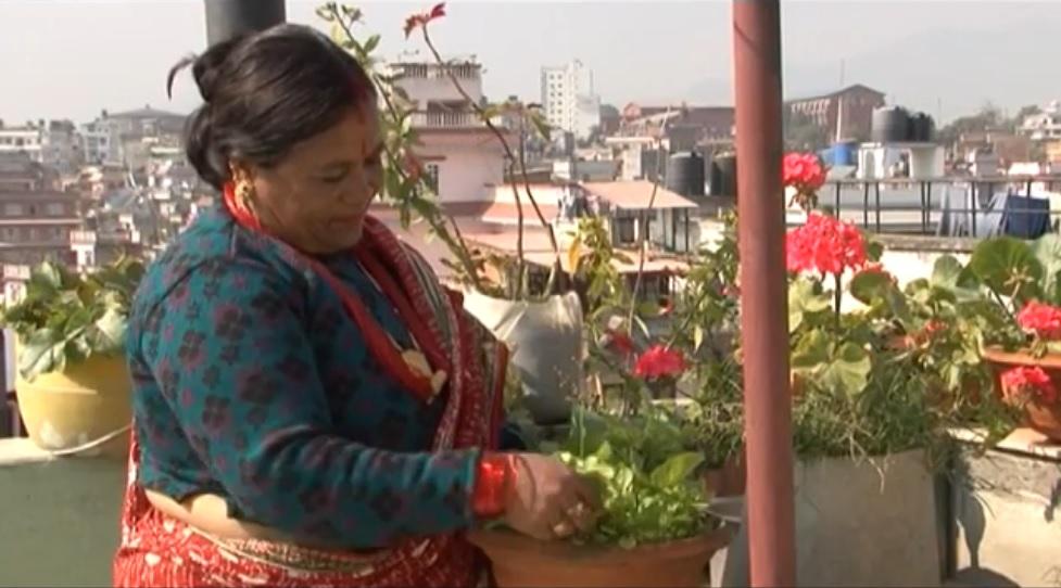 Rooftop gardening in Kathmandu, Nepal