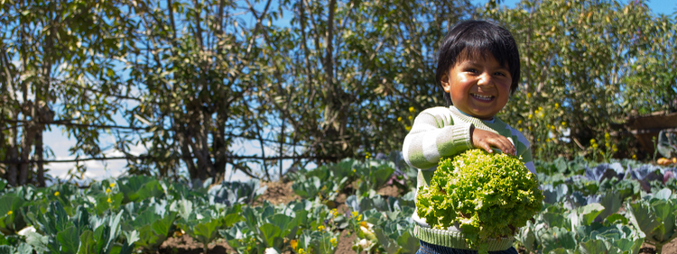 Future Policy Award 2018: Participatory urban agriculture programme in Quito