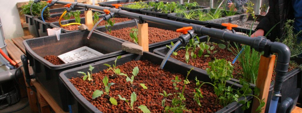 Entrepreneurship in Urban Agriculture