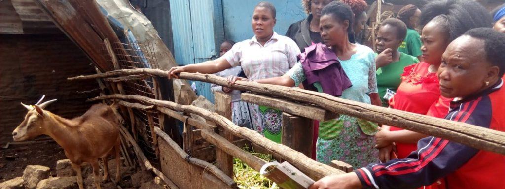 Spotlight: Urban farmers' networks in East Africa