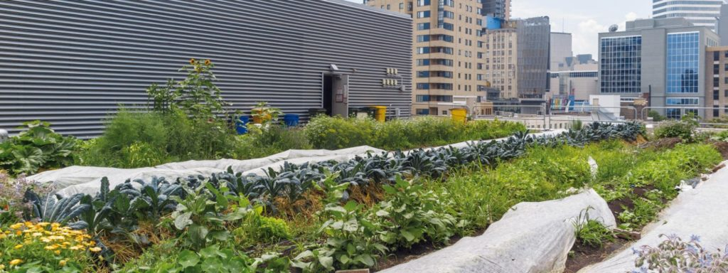 Urban agriculture: another way to feed cities